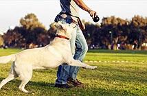 Vì sao người nuôi chó lại dễ tồn tại trong xã hội?