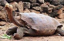 9 loài động vật không ăn mà vẫn sống khỏe
