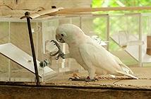 Động vật được con người nuôi thông minh hơn động vật hoang?
