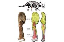Khủng long cũng có thể mắc ung thư xương như con người ngày nay