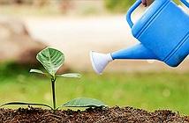 Mẹo trồng cây trong chậu không bao giờ thất bại