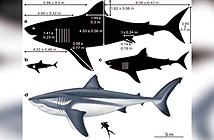 Quái vật Megalodon lớn cỡ nào?
