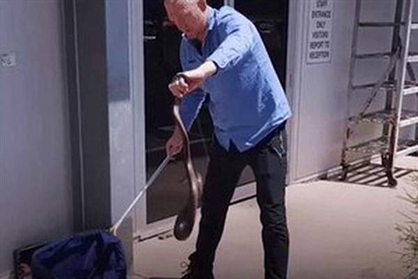 Video: Rắn cực độc hung dữ, tấn công vào mặt chuyên gia