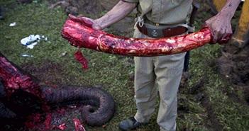 Cảnh cắt ngà voi đẫm máu gây ám ảnh