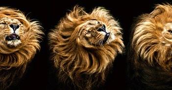 Những khoảnh khắc đẹp như mơ của động vật hoang dã