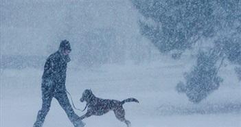 """Phẫn nộ chủ để chó đóng băng tới chết giữa lạnh """"cắt da cắt thịt"""""""