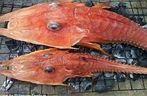 """Loài cá giống """"sinh vật thời tiền sử xuất hiện gây sửng sốt"""