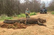 Bắt được cá sấu siêu khủng, to đến mức không ai tin là thật