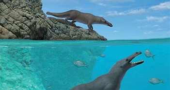 Tổ tiên cá voi có 4 chân, di chuyển trên bộ như rái cá