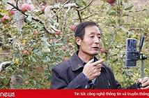 Doanh nghiệp thương mại điện tử Trung Quốc giải cứu nông sản Hồ Bắc sau phong tỏa