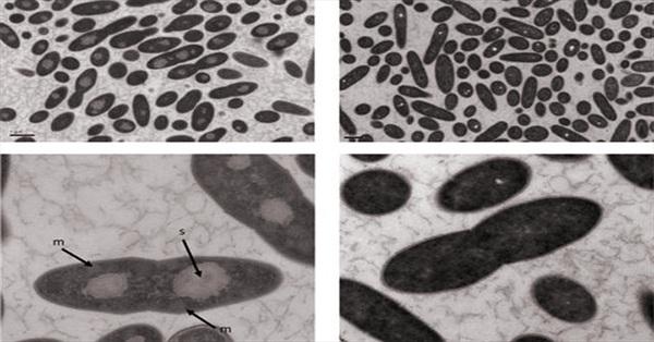 Phát hiện vi khuẩn tự tạo CO2 mà không cần oxy