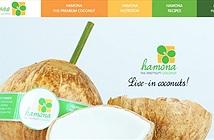 Dự án bán dừa tươi cao cấp nhận đầu tư từ Chương trình IPP2