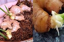 Những chất độc từ thức ăn thực vật