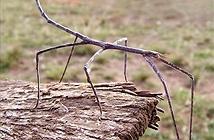 10 côn trùng có gương mặt kì dị nhất thế giới