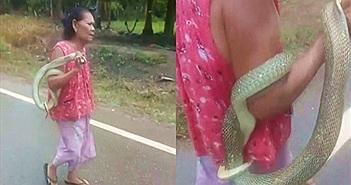 Rợn người cụ bà chơi đùa với rắn độc theo cách bất chấp nhất