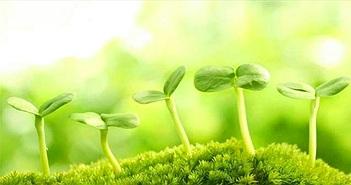 """Đã có """"siêu thực phẩm"""" có thể cứu đói cả nhân loại: Tất cả chỉ nhờ loại thực vật nhỏ bé này!"""