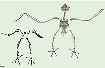 Phát hiện loài cú khổng lồ thời tiền sử có bàn chân săn mồi sát thủ