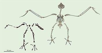 """Phát hiện loài cú khổng lồ thời tiền sử có """"bàn chân săn mồi"""" sát thủ"""