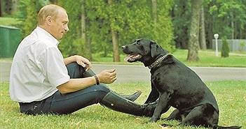 """""""Siêu"""" chó cưng của Tổng thống Nga Putin từng sống sướng thế nào?"""