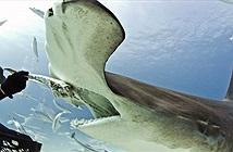 Loài cá mập đầu tiên trong lịch sử biết... ăn chay mà vẫn sống khỏe mạnh