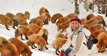 Ngôi làng có hàng trăm con cáo béo, lười ở Nhật Bản