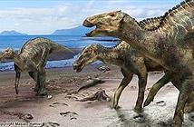 Tìm thấy hóa thạch xương loài khủng long mới, lớn nhất Nhật Bản