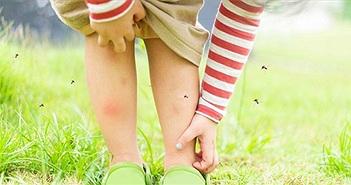 Những điều có thể bạn chưa biết về sốt xuất huyết Dengue