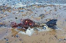 Phát hiện thi thể đẫm máu của nàng tiên cá trên bãi biển Anh