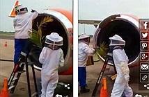 20.000 con ong khiến 3 chuyến bay không cất cánh được