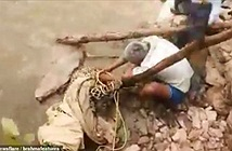 Cố giải cứu con báo bị thương, người đàn ông phải trả giá đắt