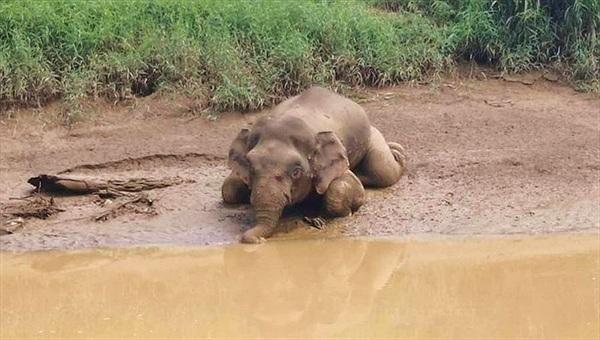 Ghê rợn cảnh voi quý hiếm bị giết tàn nhẫn lấy ngà
