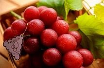 Khám phá sốc loài nho mang tên sang chảnh, trái cây đắt nhất TG