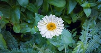 Hoa có thể tồn tại được bao lâu kể từ khi thu hoạch?