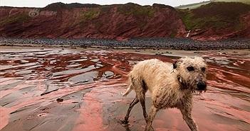 Bãi biển đổi màu đỏ máu sau một đêm, lộ nguyên nhân bất ngờ