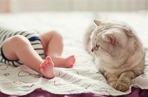 Mèo lao ra như siêu anh hùng cứu cậu chủ nhỏ gặp nguy