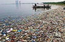 Những người thích hải sản đang ăn hàng ngàn mảnh nhựa mỗi năm?