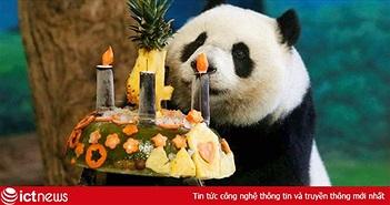 Cuộc sống này sẽ đong đầy yêu thương khi bạn thôi chúc mừng sinh nhật trên Facebook