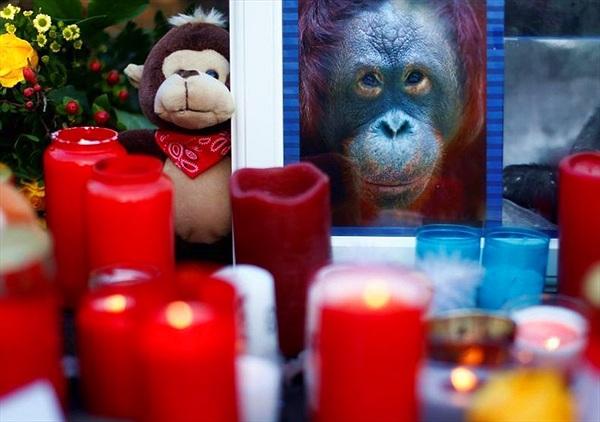 Ám ảnh vườn thú cháy, hơn 30 động vật chết thảm