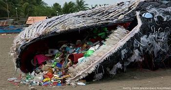 Bi kịch: Cá voi đang ăn hàng trăm, hàng ngàn mảnh rác nhựa mỗi ngày