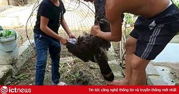 Cộng đồng mạng lên án Youtuber 1,6 triệu lượt subscriber ở Việt Nam vì làm thịt chim quý trong sách đỏ