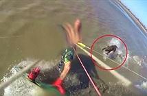 Hãi hùng hung thần chó Pitbull lao ra biển cắn người