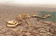 Quên khủng long đi, đây mới là vụ tuyệt chủng kinh hoàng nhất trong lịch sử Trái đất
