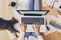 Kaspersky khuyến cáo cách tổ chức họp trực tuyến an toàn hơn