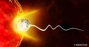 Hóa ra chính trứng mới là nhân tố quyết định chọn tinh trùng nào để thụ thai