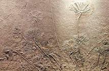 Hóa thạch 400 triệu năm tuổi được cho là chìa khóa tiến hóa của thực vật