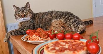 """Gặp gỡ chú mèo siêu """"chảnh"""" chỉ ăn pizza và mỳ ống"""