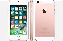 iPhone SE kế nhiệm sẽ ra mắt vào đầu năm tới