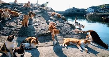"""Đảo mèo đang dần """"biến mất"""", mèo chết la liệt do... nhiễm độc?"""