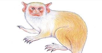 Phát hiện loài khỉ mới trong rừng mưa nhiệt đới Amazon