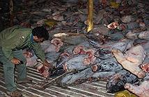Đội tàu cá Trung Quốc vét sạch mọi thứ gần quần đảo Galaparos